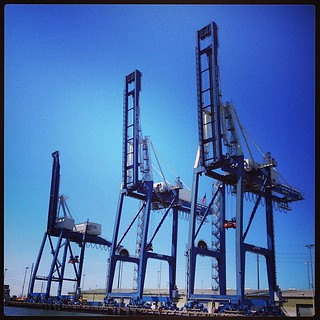 #cranes   by mark . rodriguez