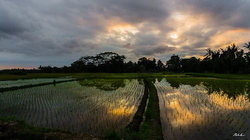 bali mygearandme fields