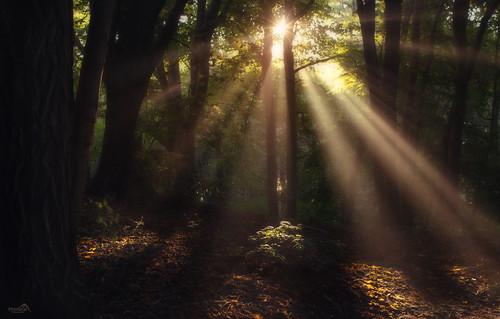 park parkpółnocny sopot poland europe sunrays sunburst sunbeams forest travel trees thebeautyofnature canon shades nature nationalgeographic landscape light green