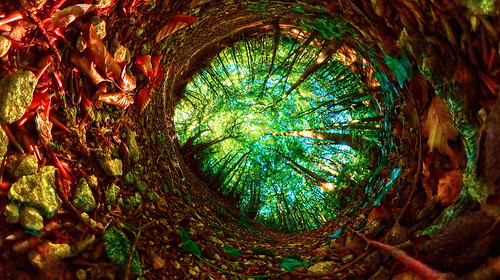 woodland 360 worms eye view northnibley gloucestershire landscape