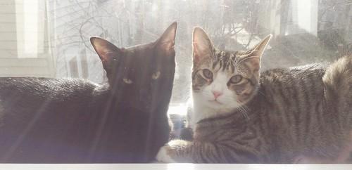 Martha and Amelia on sunny windowsill | by brownpau