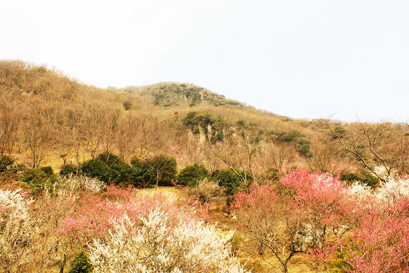 幕山_46