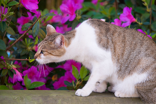 Middleton Place Cat (Mary)