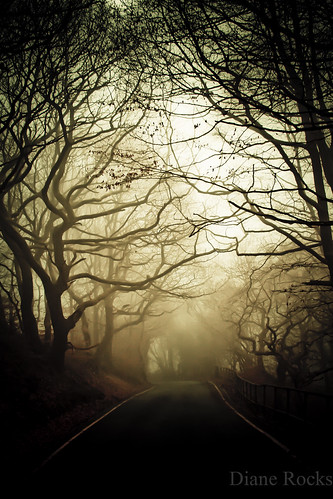 road trees mist leaves fog branches drivetoworkdark