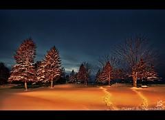 Lets light up the park