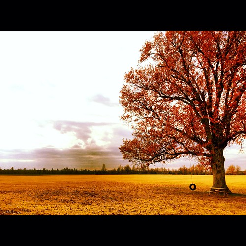 autumn tree fall field phone farm tire swing arkansas iphone
