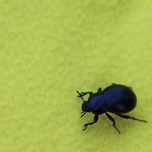 A Bug`s Life - Pt. III