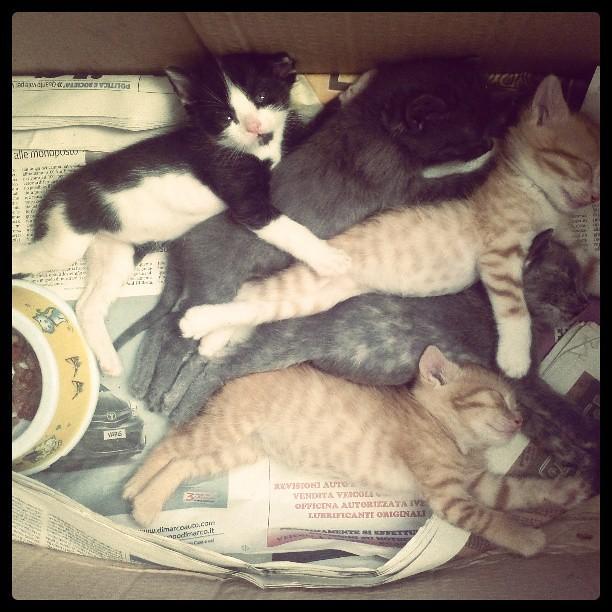 Sleeping Beauties. Filter: #Brannan. foto: ©Dolci Fusa