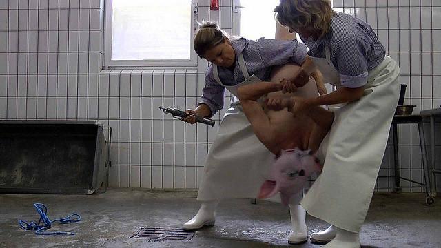 Scheinschlachtungen Schlachtung von