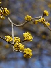 土, 2013-03-30 11:43 - ブルックリン植物園