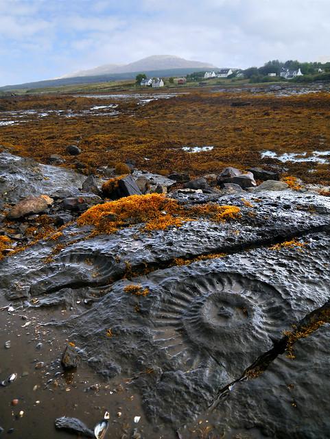 Ammonites, Breakish, Skye