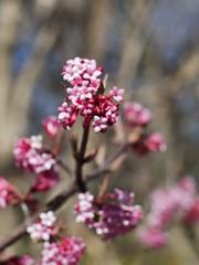 土, 2013-03-30 11:14 - ブルックリン植物園