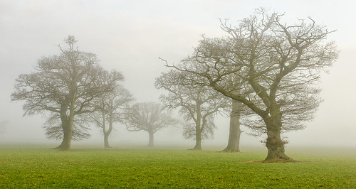 trees mist fog rural landscape countryside nikon day mood warwickshire alcester coughton d7000 jactoll nikcolorefexpro4