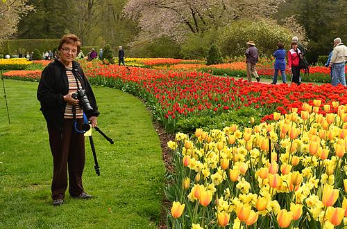Longwood Tulips -04 Joe | by KathyCat102