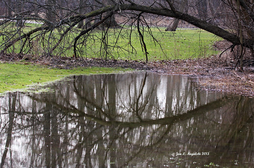 reflection tree green nature landscape spring pond michigan april fallentree vernalpond canon60d jannagal jannagalski