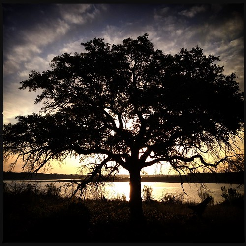 tree silhouette sunrise landscape sunrisesunset solotree stillhousehollowlake iphoneography dcfilm hipstamatic jollyrainbo2xflash purehipstamatic janelens hipstaconnect hipstaweekly hcjanedc001