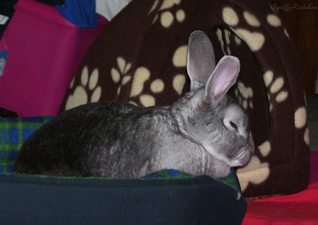 sookie resting