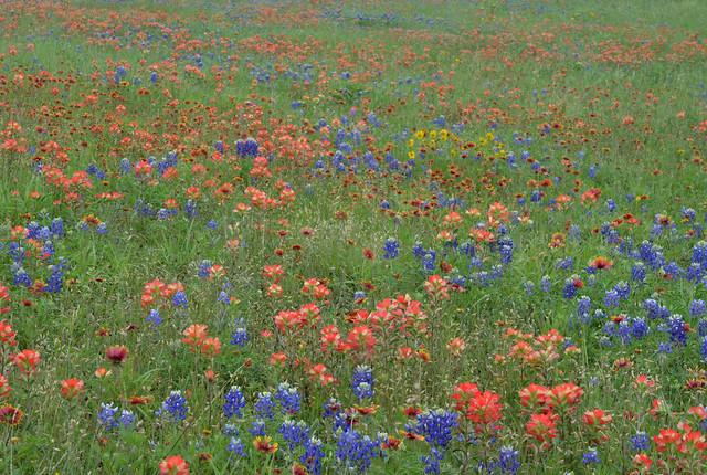 Wildflowers-17