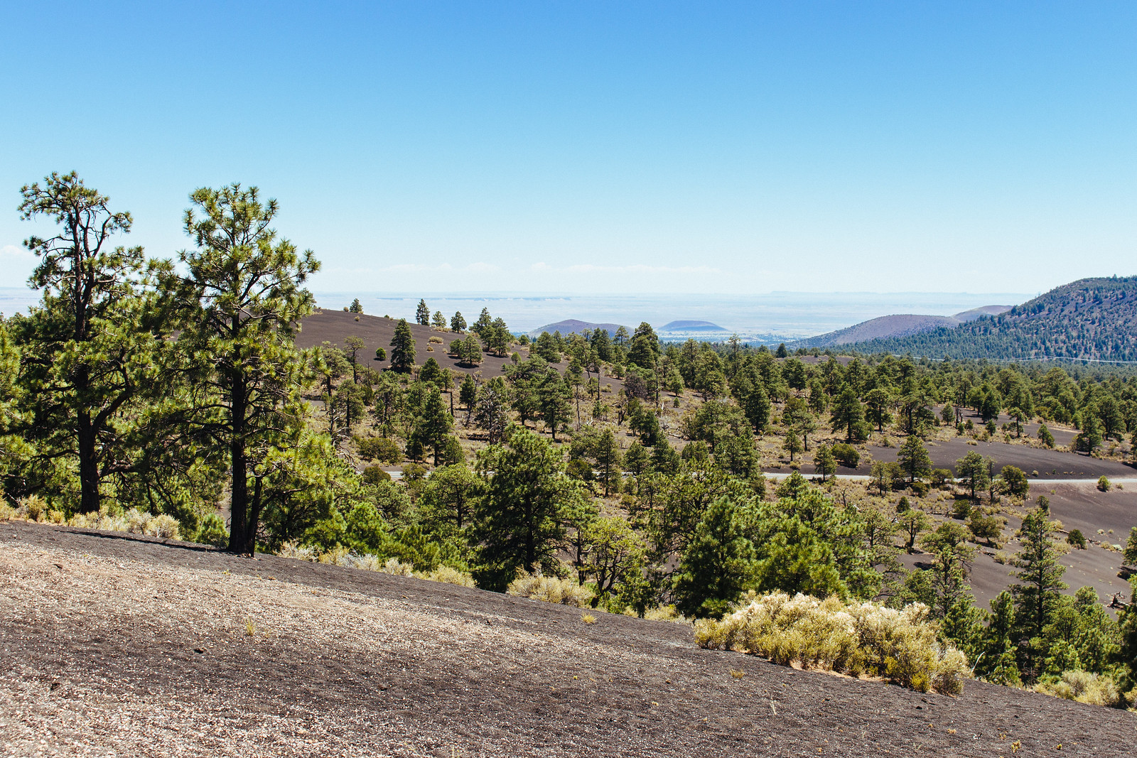 Ponderosa pines grow on cinder cone ash with the desert in the distance