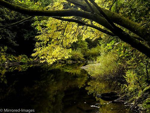 autumn codurham colour landscape leaves light lowbarnsnaturereserve nature northeastengland outdoor reflections riverwear trees