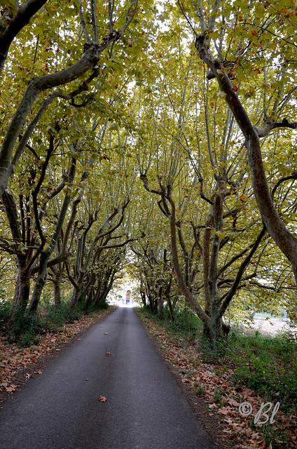 Une belle allée vers un beau domaine (Layrac, Lot-et-Garonne)