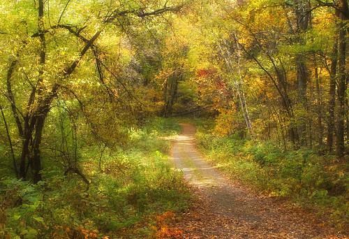 gibraltarrock wisconsin columbiacounty autumn forest janekaufman