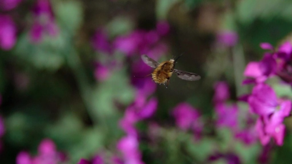 Beefly 480 fps