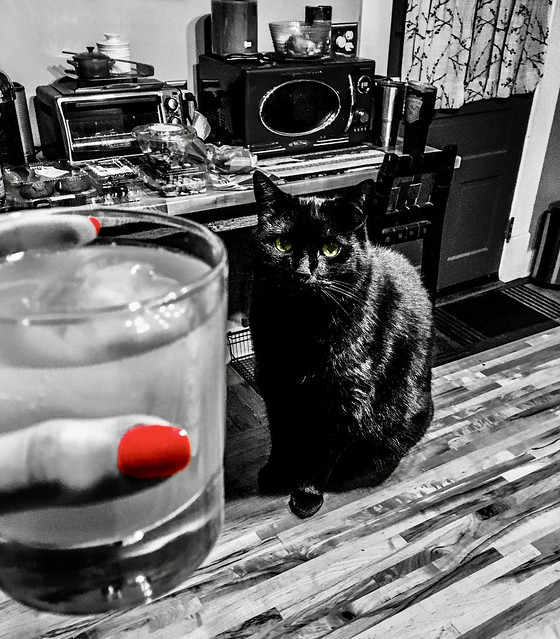 """I do not know how to teach philosophy without becoming a disturber of the peace."" ―Baruch Spinoza 🍹 🐈"