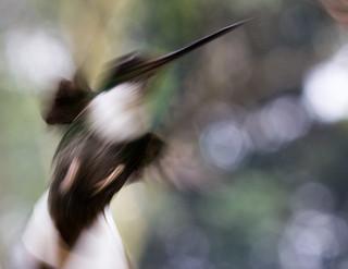 Frustración de colibrí