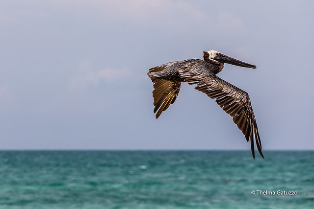 Over the caribbean sea