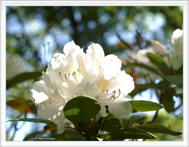 Ein Gruß aus dem Britzer Garten <3<3<3