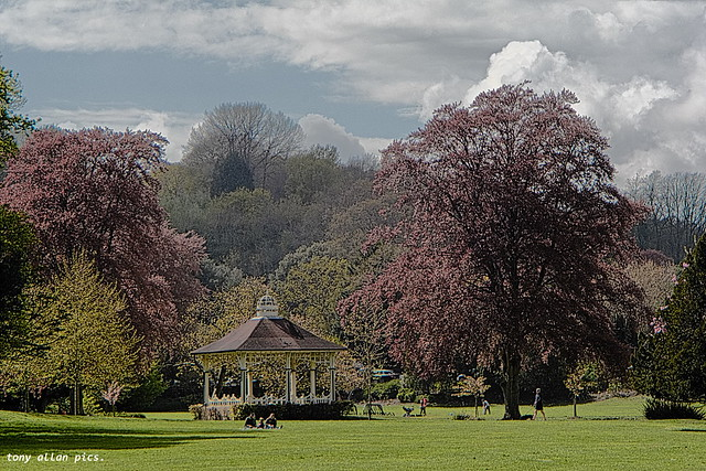 Bandstand and fabulous trees, the park, Hastings.