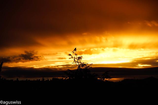 a Bird enjoying the sunset