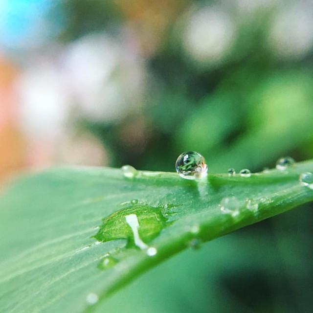 Rainning day Hello morning! #life #photobyladious
