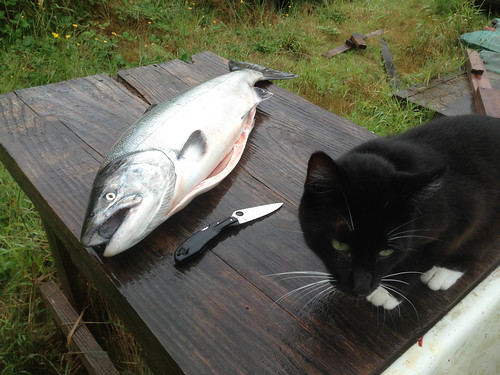 cat and fish | by red alder ranch