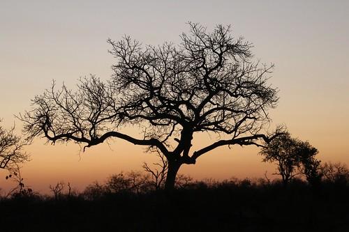 africa southernafrica sunset odt black