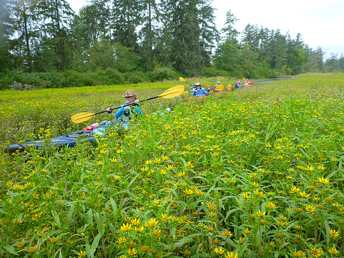 paddling through flowers | by red alder ranch