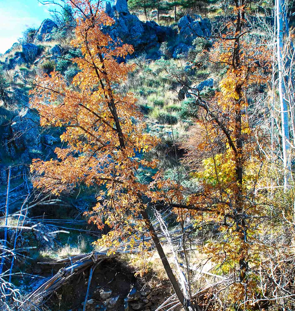 El otoño vencido