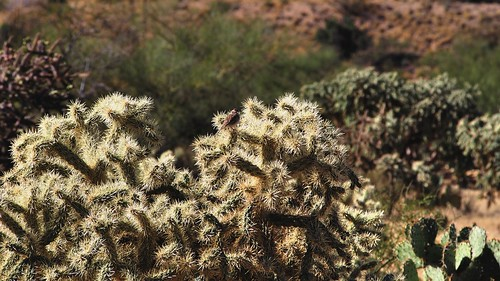 olympuspenliteepl5 edk7 2013 usa arizona sahuarita arizonaaerospacefoundation titanmissilemuseum unitedstatesairforce usairforce usaf airforcefacilitymissilesite8 titaniiicbmsite5717 complex5717 active196382 nationalhistoriclandmark cactus landscape nature desert