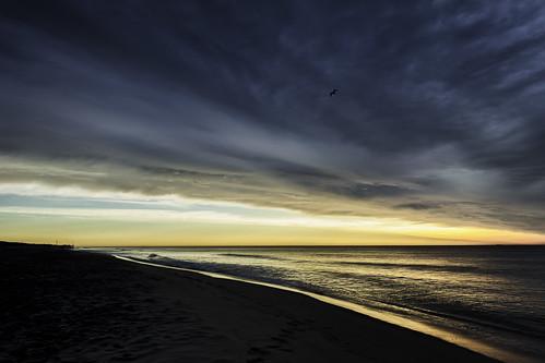 sunrise seasidepark seasideheights seagull ocean sky