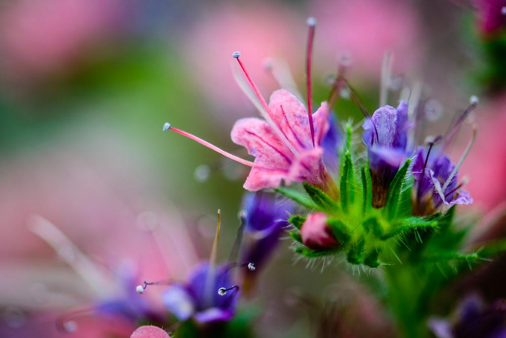 Nature's Floral Arrangement