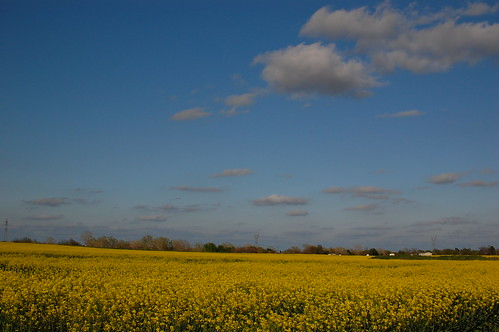 flowers sky oklahoma yellow clouds ok canola