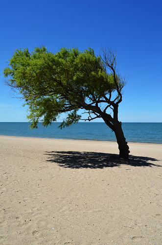 tree beach june windblown goderich