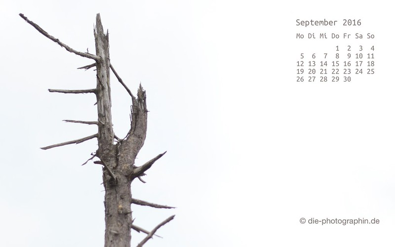 toterBaum_september_kalender_die-photographin