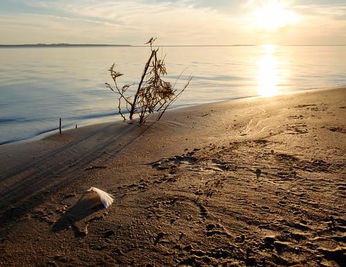 feather sand mi sunset water sky landscape beach beaverisland lakemichigan michigan unitedstates us