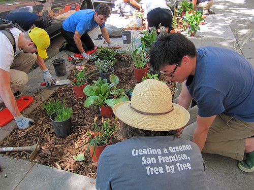 Volunteers planting | by Friends of the Urban Forest