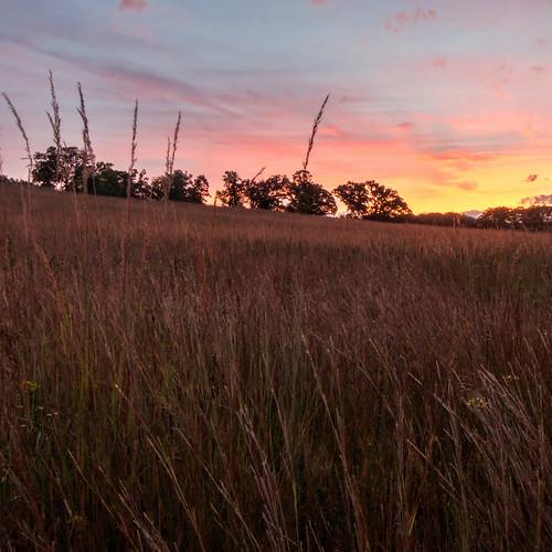 shoefactoryroadprairie poplarcreekprairie cookcountyforestpreserves sunrise indiangrass prairie kame illinoisnaturepreserve september