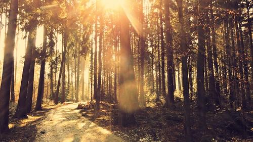 light sunlight nature sunshine forest sunrise landscape switzerland flare