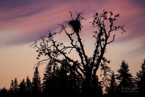 birds oregon river spring unitedstates tualatin avian nationalwildliferefuge sherwood nwr