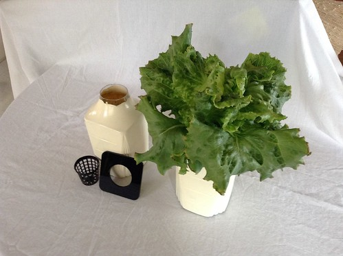 Hydroponic Lettuce growing adapter
